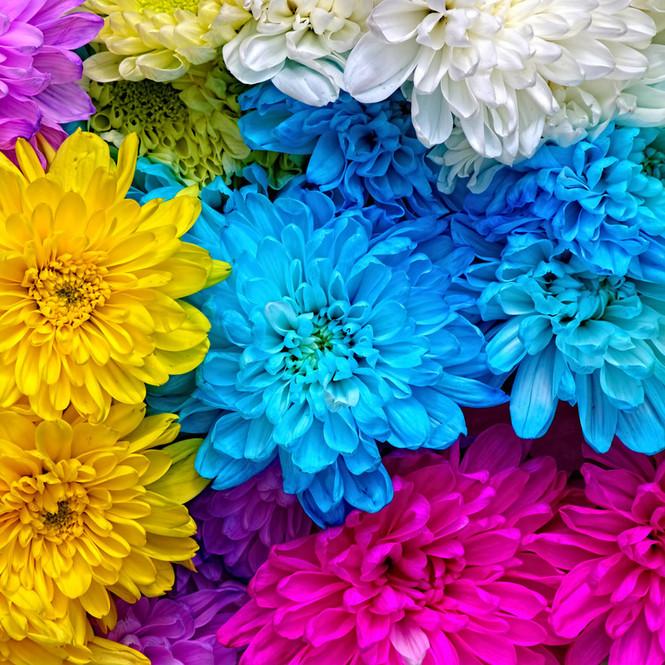 """Хризантемы от сети цветочных супермаркетов """"Цветочный ряд"""""""